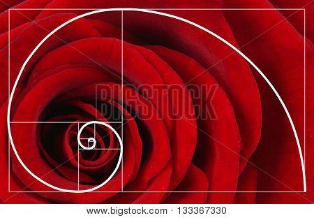 Illustration of spiral arrangement in nature. Fibonacci pattern poster