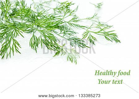 Sprigs of green dill on a white background. Wet green dill. Frame with copy space for text. Isolated studio close-up