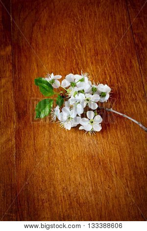 apple Blossoms on wooden background. close up