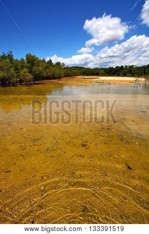 Pond Coastline River  In The  Blue Lagoon Relax And Bush In Madagascar  Nosy Iranja