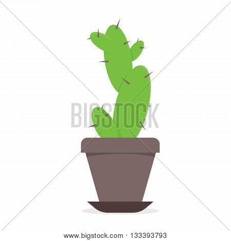 Cactus. Vector illustration of plant isolated on white background.