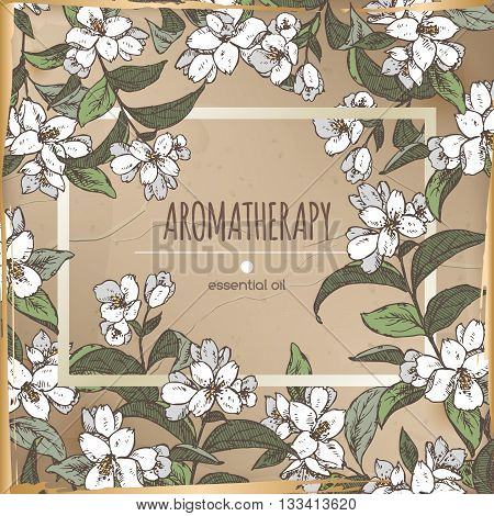 Vintage frame template with color Jasminum officinale aka common jasmine sketch. Aromatherapy series. Great for traditional medicine, perfume design, cooking or gardening.