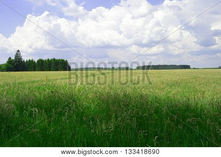 Still very green wheatfield in the campaign.