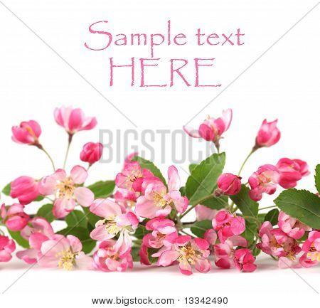 Pink spring flowers border
