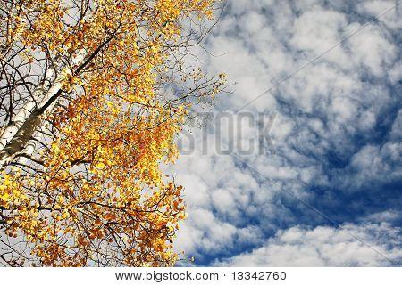 Autumn Aspen and Cloudy Sky