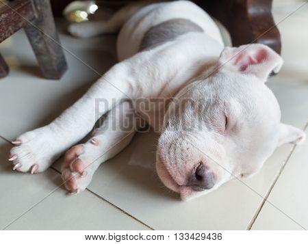 Puppy dog sleeping on tiled, dog sleeping