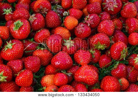 Fresh ripe red organic strawberry from garden.  Background