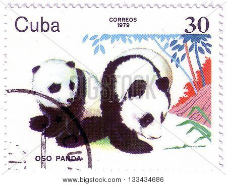 Cuba - Circa 1979: A Stamp Printed In Cuba Shows Pandas, Series Zoo Animals, Circa 1979