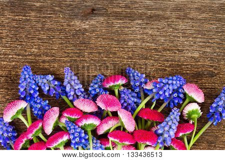Muscari and Daisy Flowers on wooden table border