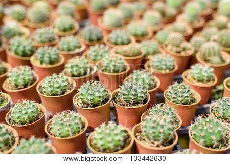 Little Cactus In The Garden