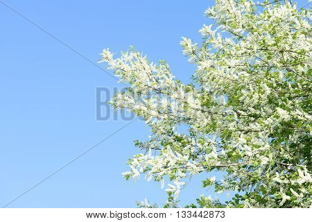 Tree With White Flower