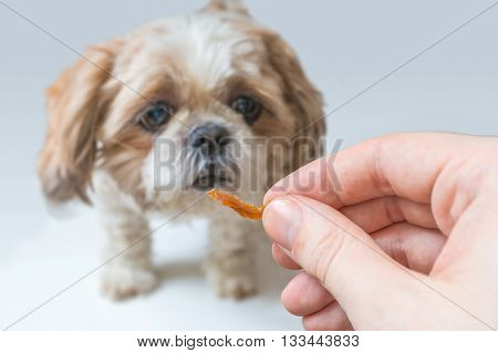 Dog training concept. Man holds treat in hand.