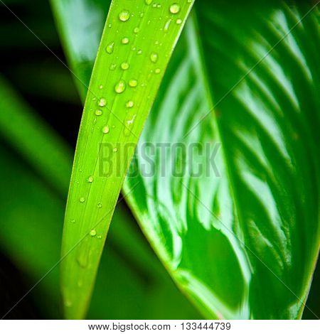 Green leaf with drops background texture, macro