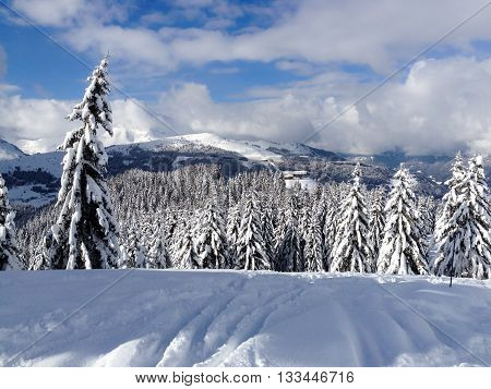 Snow covered mountain landscape and fir trees