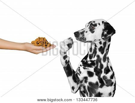 Cute dog refuses to eat from hand -- isolated on white