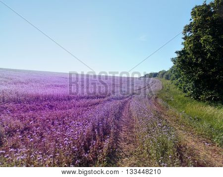Photo of floral field with beautiful landscape nature