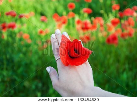 Woman Hand With Poppy Flowers
