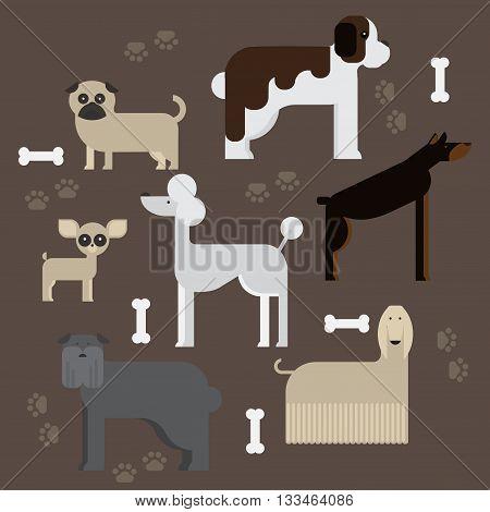 flat dog characters set, cartoon pet animal collection chihuahua, doberman andmastiff. Afgan greyhound, st bernard, pug, poodle and dachshund.