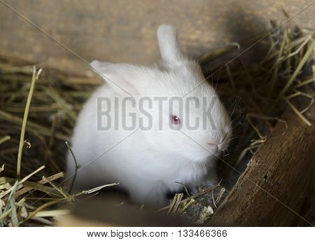 sweet white baby bunny in a hutch