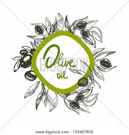 hand drawn ink olive branch, olive oil, olives. vector eps 10