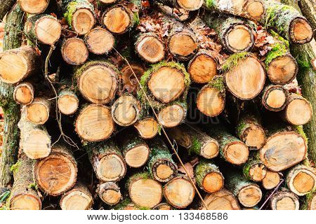 Wooden logs. Timber logging in autumn forest. Freshly cut tree logs piled up as background texture