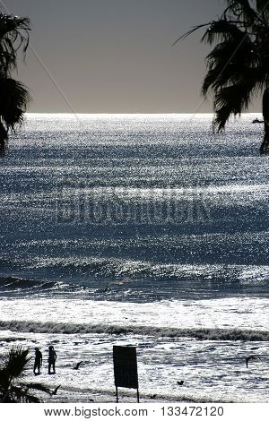 The silhouettes of bathers and palm trees on the beach in Oceanside against the light.