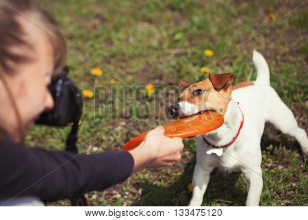 Girl Taking Photo Of Playful Jack Russell Terrier Dog