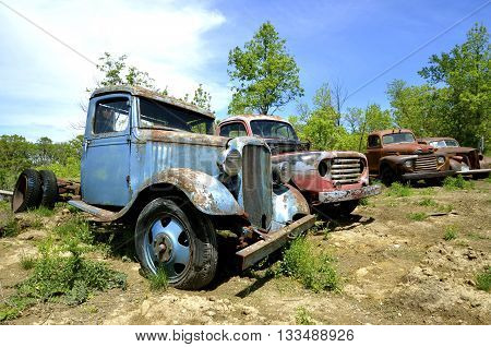 Old pickups  in various stages of disrepair are lined up in a junkyard
