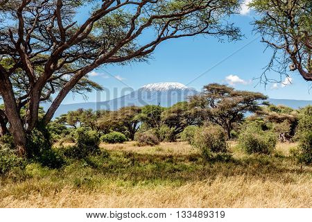 Snow on the top of the Mount Kilimanjaro in Amboseli