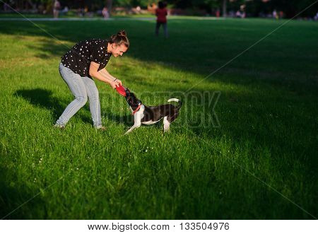 The young woman plays with a dog on a green lawn in park. She tries to pull out a disk of red color from a mouth of a dog. But the dog has seized him strong. She likes to play.