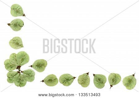 Pressed and dried flowers elm. Border edging for decoration scrapbook. Isolated on white background.