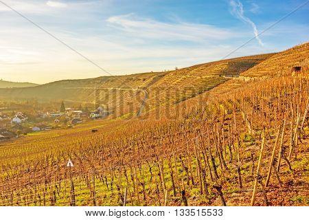 sunset / sunrise over vineyard - blue / yellow sky