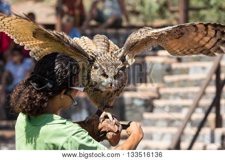 La Lajita Fuerteventura Spain - September 11 2015: Bird Of Prey Show Oasis Park Fuerteventura Canary
