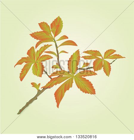 Twig decorative shrub colorful leaves vector illustration
