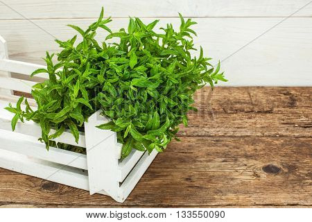 bunch of spearmint on a wooden table background