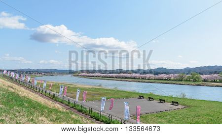 view of Tenshochi Park in Iwate PrefectureJapan is famous for the more than 10000 cherry trees planted alongside the Kitakami River