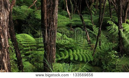 Vegetation in the Abel Tasman National Park.