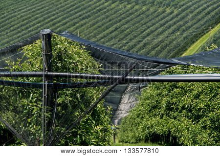 hail nets to protect orchards against hail