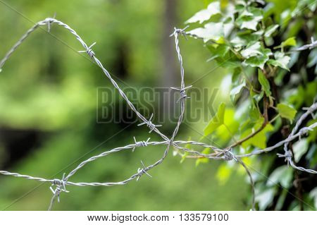barbed wire and nature