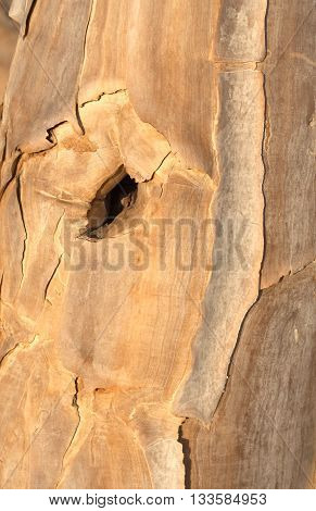 bark with a quiver tree knothole, Namibia