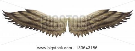 brown wings isolated on a  white background.