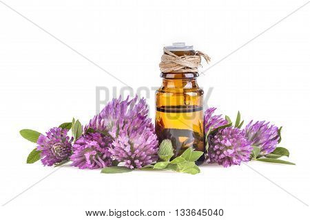 Essential oil made from clover on white background