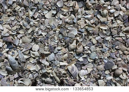 Seashells background. Many sea shells on a beach summer background.