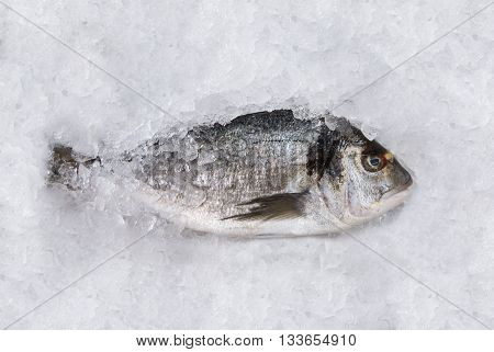 Horizontal top view of a dorada fish on an ice table at the market