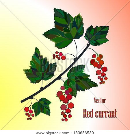 Red currant composition, currant Leaves, currant Vector, berry illustration of Currant branch. Currant Isolated. Bunch of garden berries.