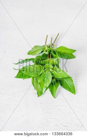 Sweet Basil Leaf (Ocimum basilicum Linn) on white wooden Background.