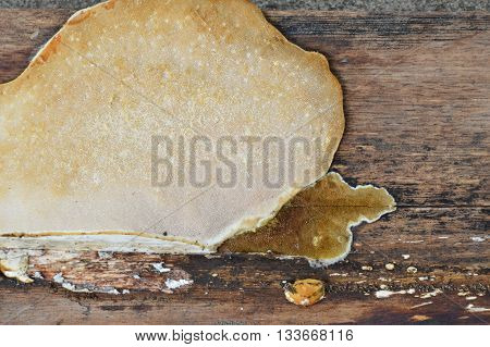 fungus on old wooden board in park