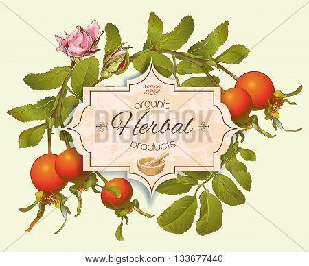 Vintage rosehip banner. Design for herbal tea, rosehip syrup, cosmetics, store, beauty salon, natural organic health care products.