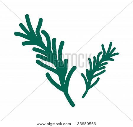 Green parsley leaves isolated on white background and parsley salad fresh healthy herb. Green food branch parsley salad and natural spice condiment aromatic parsley salad. Herbal organic cuisine.