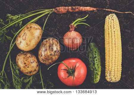 fresh ripe vegetables lying on the soil
